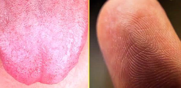 اندام هایی که مانند اثر انگشت منحصربه فرد هستند