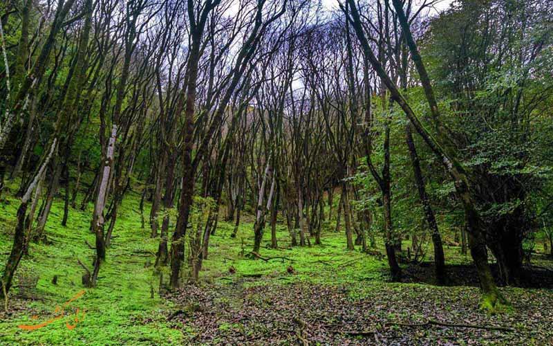 سفر به زیباترین جنگل های شمال برای دوستداران طبیعت