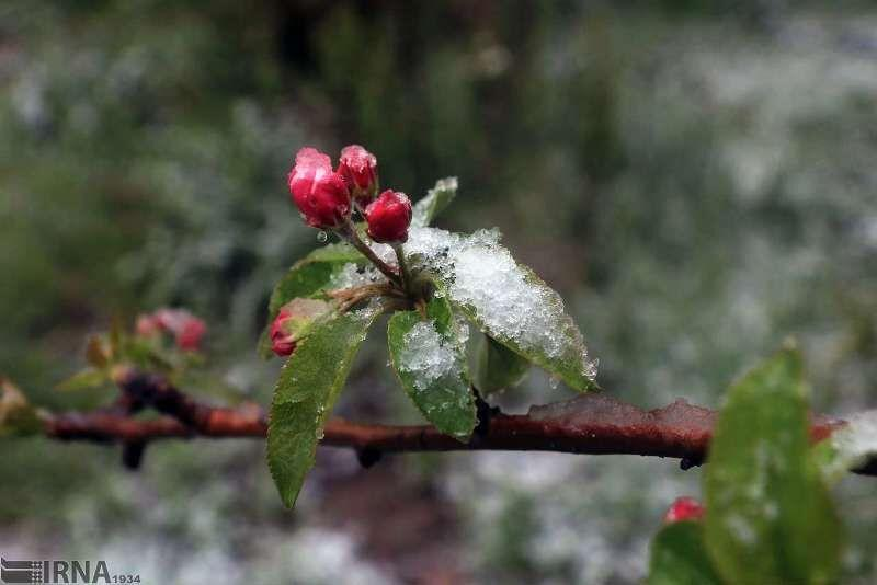 خبرنگاران جهادکشاورزی خراسان شمالی نسبت به سرمازدگی باغ ها هشدار داد