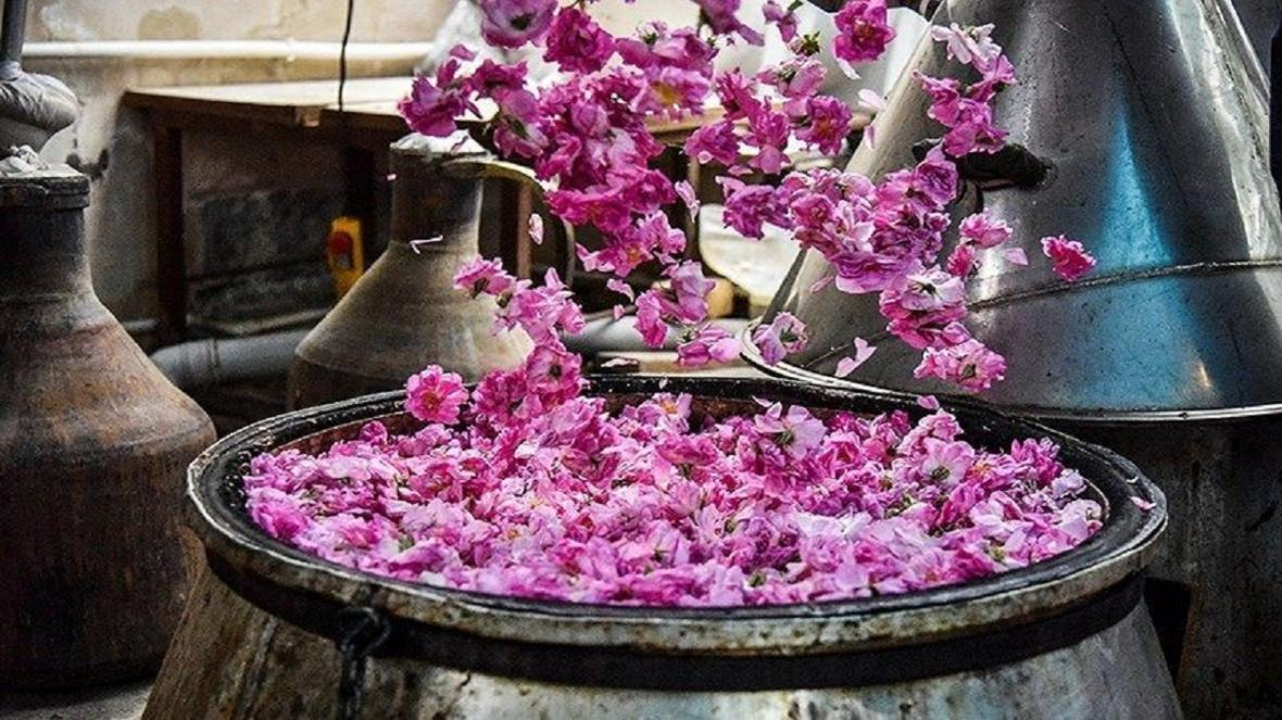 جشنواره گلابگیری در کاشان برگزار نمی گردد